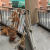 大阪府吹田市へ引っ越しに伴いベランダの植木鉢の処分にお伺いさせて頂きました。